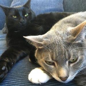 ctc92-cats
